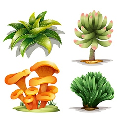 Different plants vector image