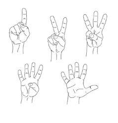 Set of hands counting one to five inner side vector image