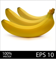 Three bananas in batch vector