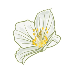 Jasmine flower isolated vector