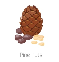 Pile of nuts pine vector