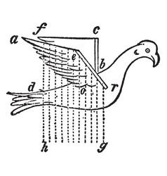 Borelli bird with artificial wings vintage vector