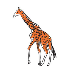 Giraffe hand drawn isolated icon vector