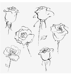 Hand drawn sketch of bud of roses vector image vector image