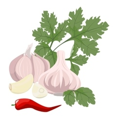 Garlic parsley and hot red pepper vector
