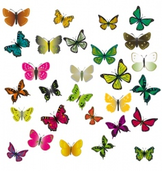 a collection of colorful butterflies vector image