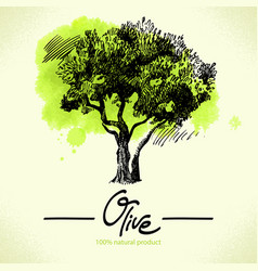 Hand drawn olive with watercolor back vector