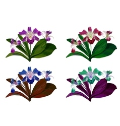 Orchid flower with green leaves on white vector