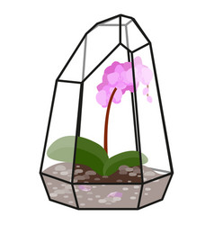 With glass florarium vector