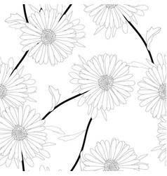 aster flower on white background vector image