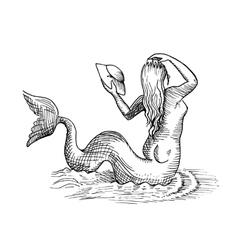 Mermaid or siren vector