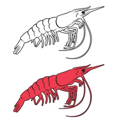 King prawn vector