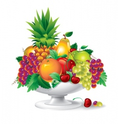 fruit in a vase vector image