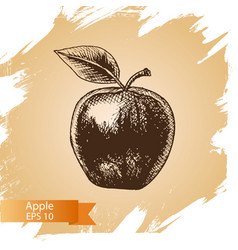 sketch - apple - vector image