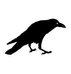 Silhouette of a crows in different vector