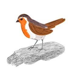 Robin-bird-on-the-stone vector