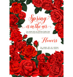 Spring roses flowers love greeting card vector