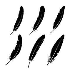 Group of feather on white background vector