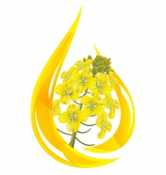 Canola oil vector