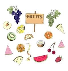Fruit set hand drawn sketches vector