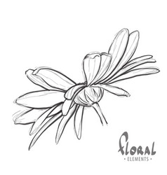design sketch of daisies vector image vector image