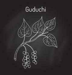 guduchi tinospora cordifolia ayurvedic medicinal vector image