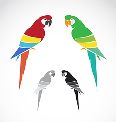 Image of a parrot vector