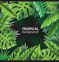 tropical leaves on black vector image