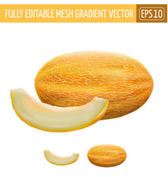 Melon on white background vector