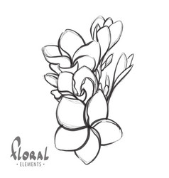 Tropical flowers on a white background vector