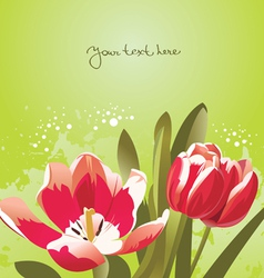 floral background with tulips vector image