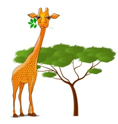 Giraffe eating leaves in Africa isolated vector image