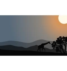 One zebra silhouette in hills vector