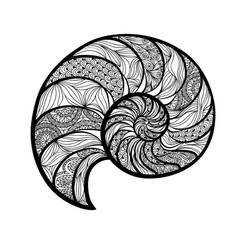 Seashell nautilus spiral pattern wave nautilus vector