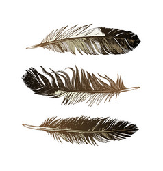 3 hand drawn black and white feathers vector image vector image