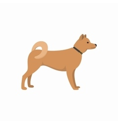 Akita inu - dog asian breed on white background vector