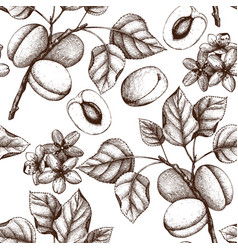 apricot vintage background vector image vector image
