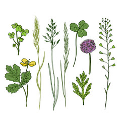 wild flowers hand drawn set ink herbs in color vector image