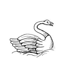 Hand-drawn sketch of swan vector image
