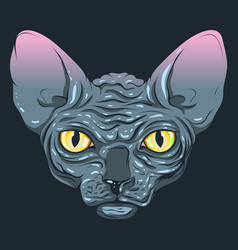 Cat without fur sphinx with a dark gray vector