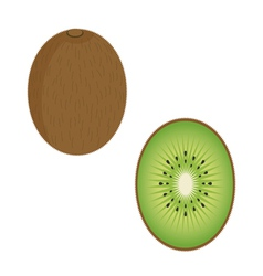 Kiwi fruit vector
