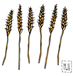 bunch of malt doodle sketsh ripe ears of malt vector image