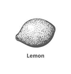 hand-drawn lemon vector image vector image