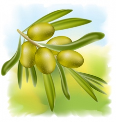 olives branch vector image vector image