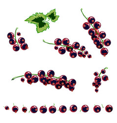 stylized berries set vector image vector image