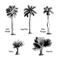 Set of hand drawn palm sketches vector