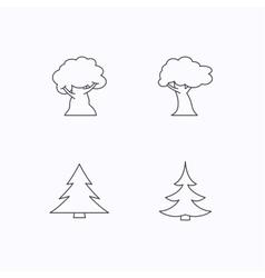 Tree oak-tree and christmas tree icons vector image