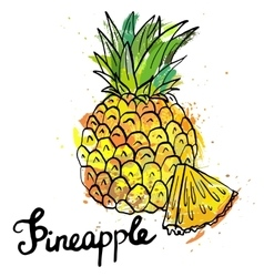 Hand drawn pineapple vector