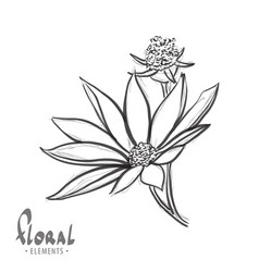 Flower close-up on a white background vector