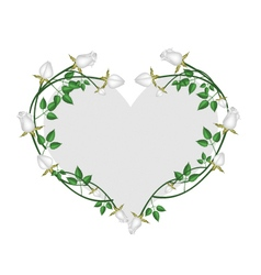 White roses flowers in a heart shape vector